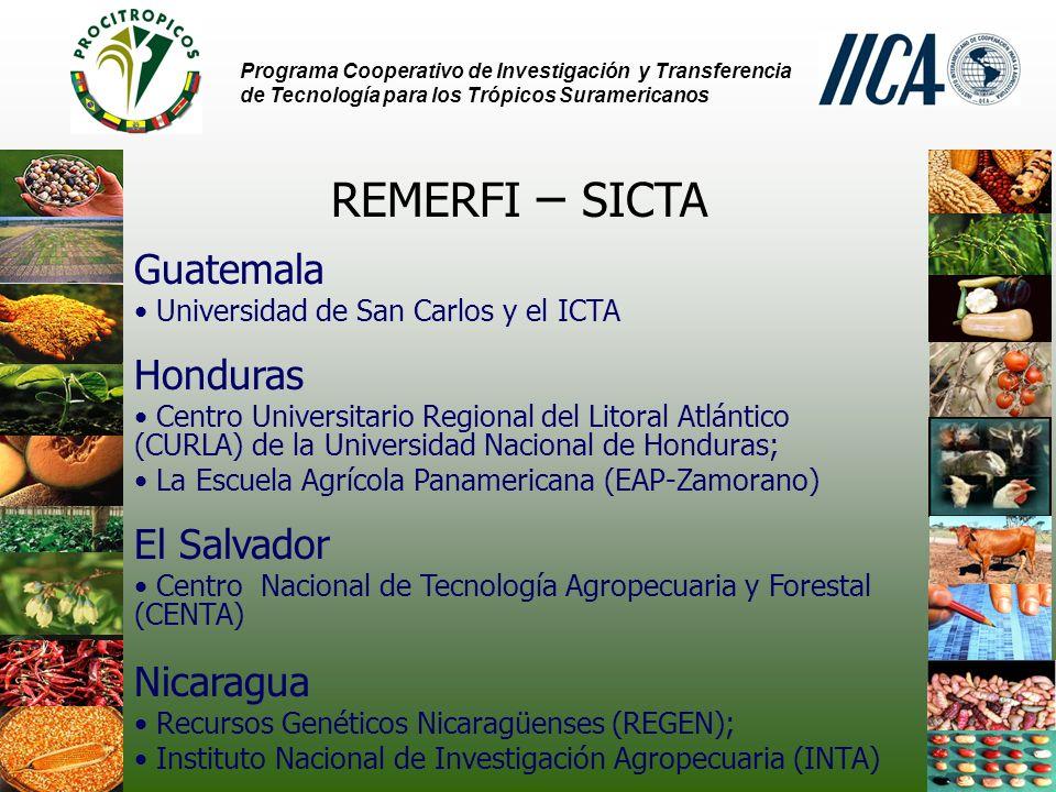 Programa Cooperativo de Investigación y Transferencia de Tecnología para los Trópicos Suramericanos REMERFI – SICTA Guatemala Universidad de San Carlos y el ICTA Honduras Centro Universitario Regional del Litoral Atlántico (CURLA) de la Universidad Nacional de Honduras; La Escuela Agrícola Panamericana (EAP-Zamorano) El Salvador Centro Nacional de Tecnología Agropecuaria y Forestal (CENTA) Nicaragua Recursos Genéticos Nicaragüenses (REGEN); Instituto Nacional de Investigación Agropecuaria (INTA)
