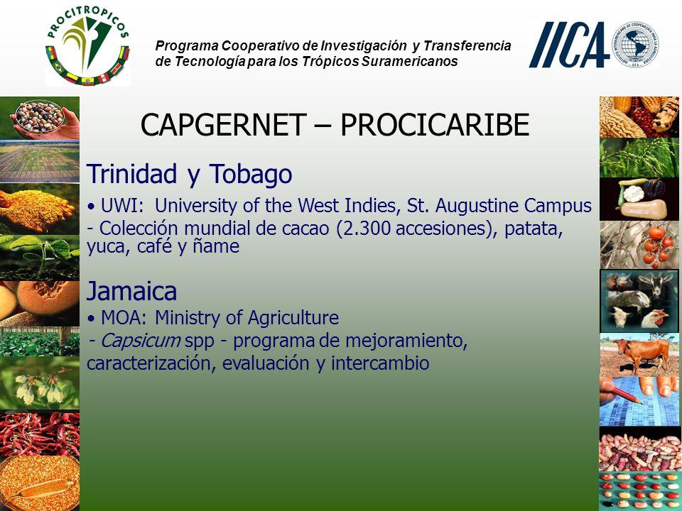 Programa Cooperativo de Investigación y Transferencia de Tecnología para los Trópicos Suramericanos CAPGERNET – PROCICARIBE Trinidad y Tobago UWI: University of the West Indies, St.