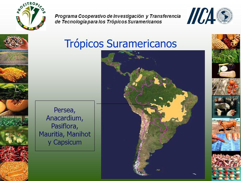 Programa Cooperativo de Investigación y Transferencia de Tecnología para los Trópicos Suramericanos Trópicos Suramericanos Persea, Anacardium, Pasiflora, Mauritia, Manihot y Capsicum