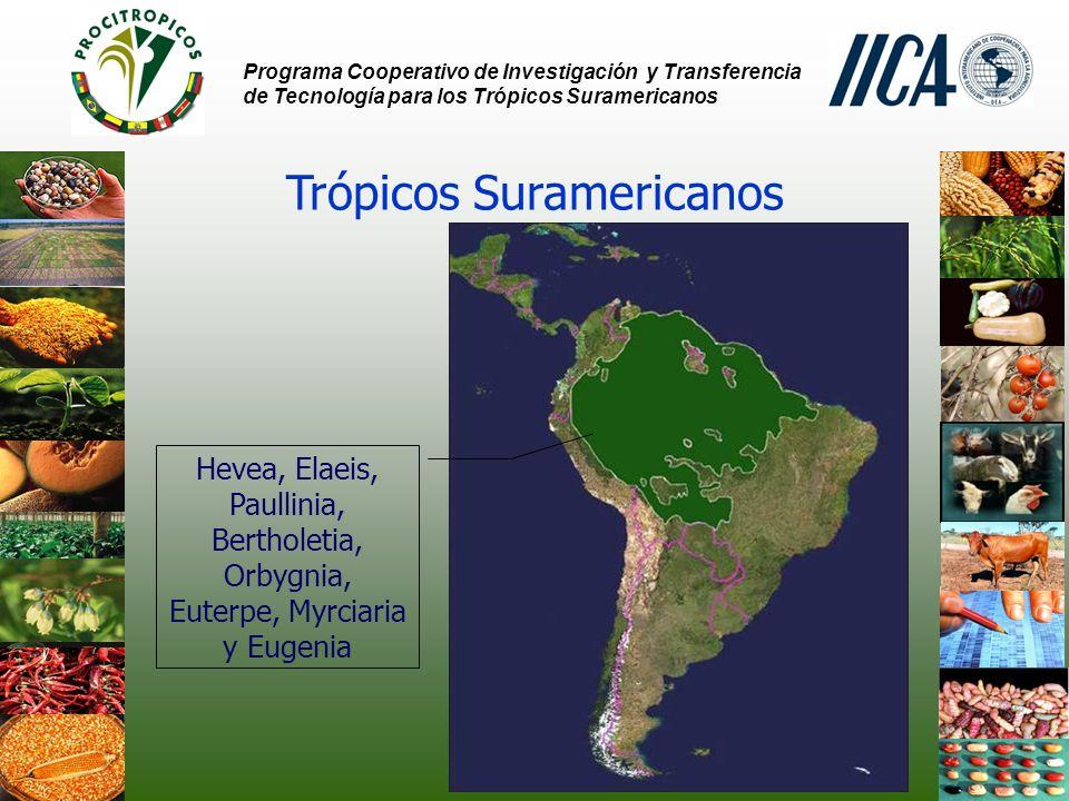 Programa Cooperativo de Investigación y Transferencia de Tecnología para los Trópicos Suramericanos Trópicos Suramericanos Hevea, Elaeis, Paullinia, Bertholetia, Orbygnia, Euterpe, Myrciaria y Eugenia