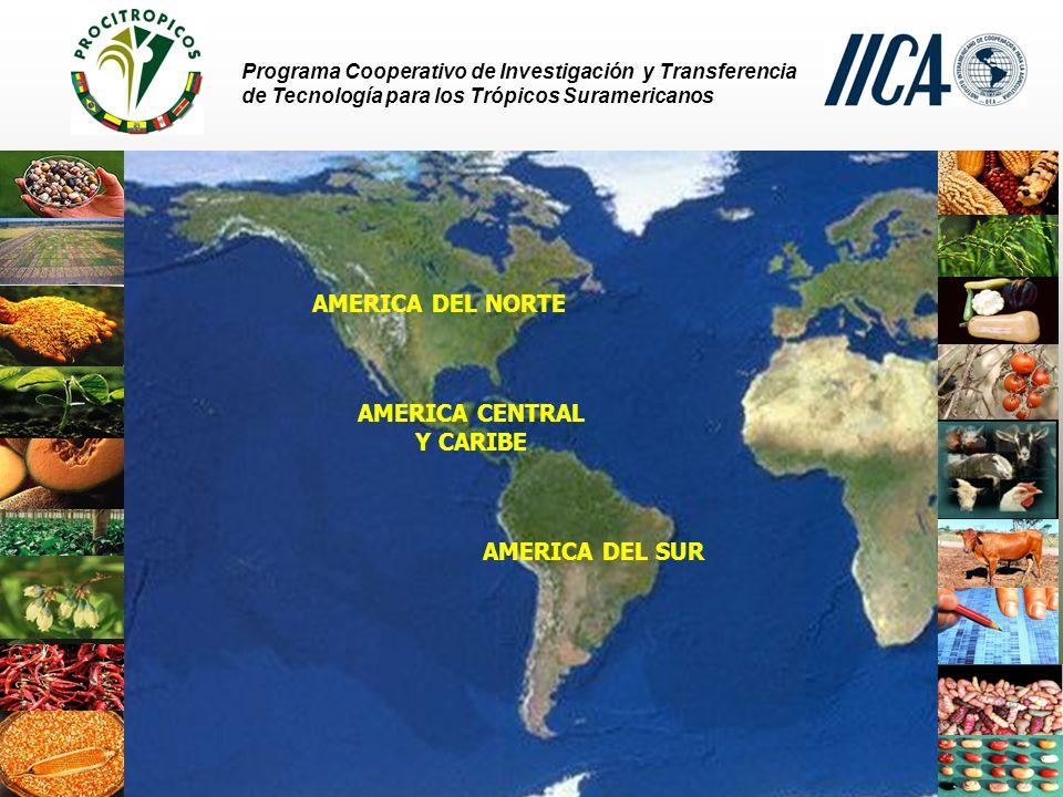 Programa Cooperativo de Investigación y Transferencia de Tecnología para los Trópicos Suramericanos AMERICA DEL SUR AMERICA CENTRAL Y CARIBE AMERICA DEL NORTE