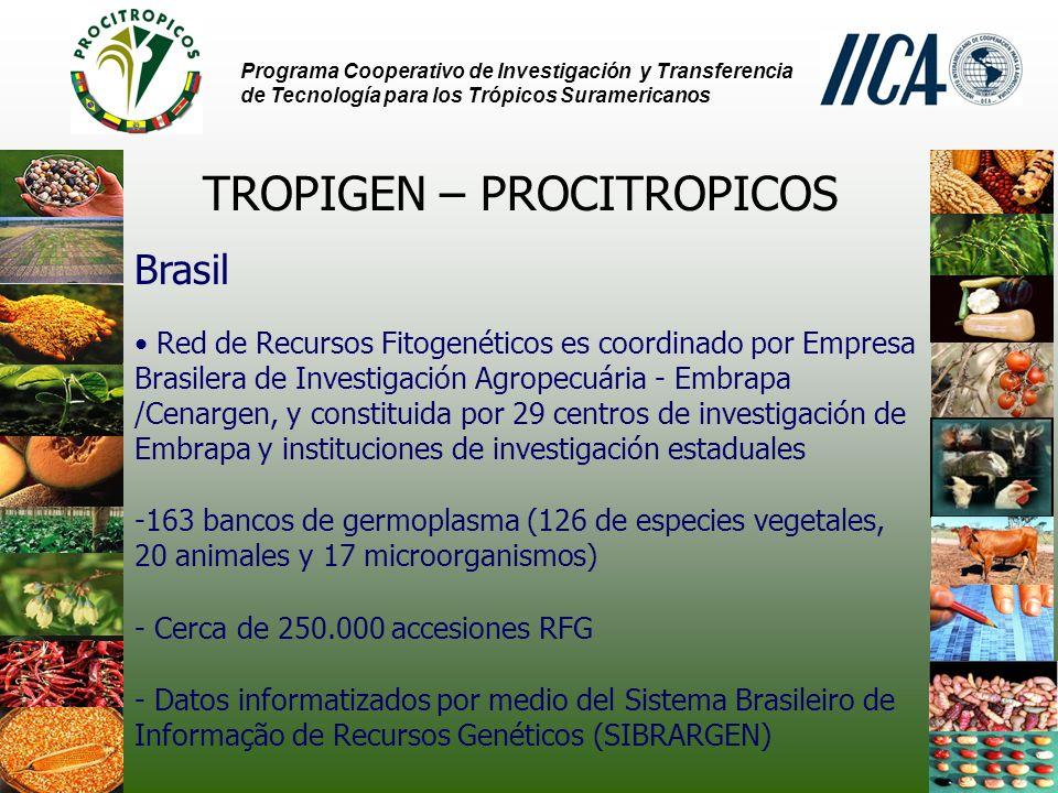 Programa Cooperativo de Investigación y Transferencia de Tecnología para los Trópicos Suramericanos TROPIGEN – PROCITROPICOS Brasil Red de Recursos Fitogenéticos es coordinado por Empresa Brasilera de Investigación Agropecuária - Embrapa /Cenargen, y constituida por 29 centros de investigación de Embrapa y instituciones de investigación estaduales -163 bancos de germoplasma (126 de especies vegetales, 20 animales y 17 microorganismos) - Cerca de 250.000 accesiones RFG - Datos informatizados por medio del Sistema Brasileiro de Informação de Recursos Genéticos (SIBRARGEN)