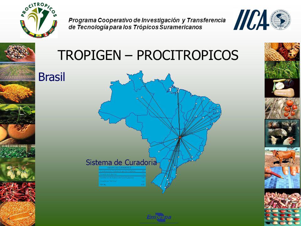 Programa Cooperativo de Investigación y Transferencia de Tecnología para los Trópicos Suramericanos TROPIGEN – PROCITROPICOS Brasil Sistema de Curadoria