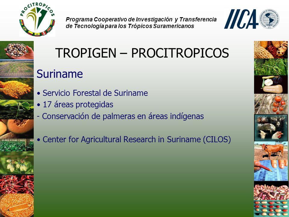 Programa Cooperativo de Investigación y Transferencia de Tecnología para los Trópicos Suramericanos TROPIGEN – PROCITROPICOS Suriname Servicio Forestal de Suriname 17 áreas protegidas - Conservación de palmeras en áreas indígenas Center for Agricultural Research in Suriname (CILOS)