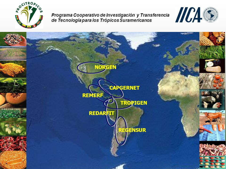 Programa Cooperativo de Investigación y Transferencia de Tecnología para los Trópicos Suramericanos TROPIGEN – PROCITROPICOS Ecuador Departamento Nacional de Recursos Fitogenéticos y Biotecnología (DENAREF) coordinado por el Instituto Nacional de Investigación Agropecuaria (INIAP) - Conservación en cámara a largo plazo (- 15 o C) y en campo - Cerca de 20.000 accesiones - Bororó (623 accesiones), Cacao (313 accesiones), Chontaduro (125 accesiones) - Documentación manual y computarizada