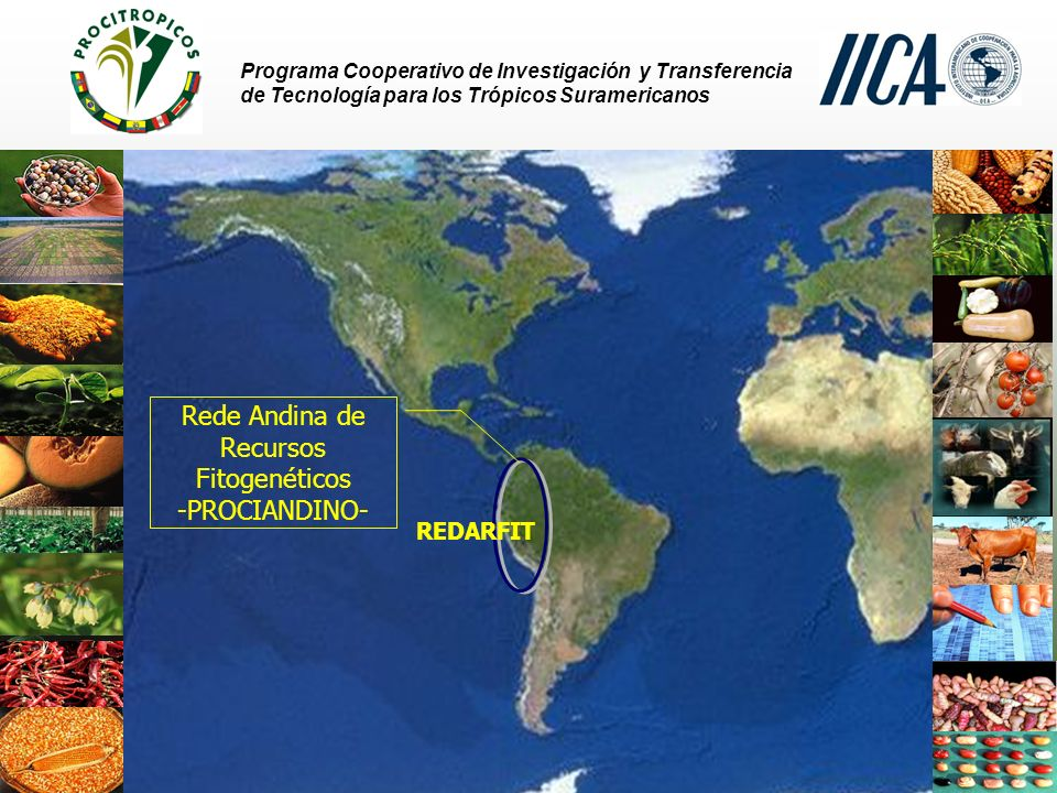Programa Cooperativo de Investigación y Transferencia de Tecnología para los Trópicos Suramericanos REDARFIT Rede Andina de Recursos Fitogenéticos -PROCIANDINO-