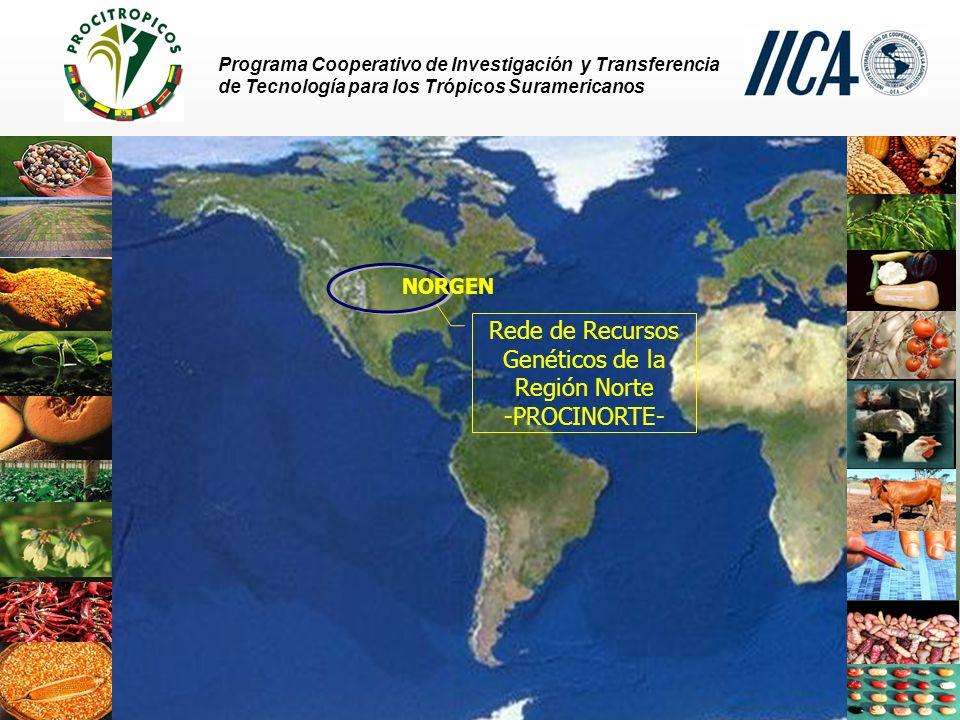 Programa Cooperativo de Investigación y Transferencia de Tecnología para los Trópicos Suramericanos TROPIGEN – PROCITROPICOS Perú Programa Nacional de Recursos Genéticos y Biotecnología (PRONARGEN) coordinado por el Instituto Nacional de Investigación y Extensión Agropecuaria (INIA) - Conservación en cámara a largo plazo (- 24 o C) y en campo - Cerca de 20.000 accesiones - Colecciones de yuca (617 accesiones, 65% de accesiones caracterizadas y evaluadas) - Documentación manual y computarizada CIP mantiene una larga colección de tubérculos andinos