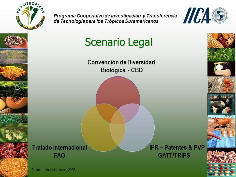 Programa Cooperativo de Investigación y Transferencia de Tecnología para los Trópicos Suramericanos Scenario Legal Convención de Diversidad Biológica - CBD IPR – Patentes & PVP GATT/TRIPS Tratado Internacional FAO Source: Mauricio Lopes, 2005.