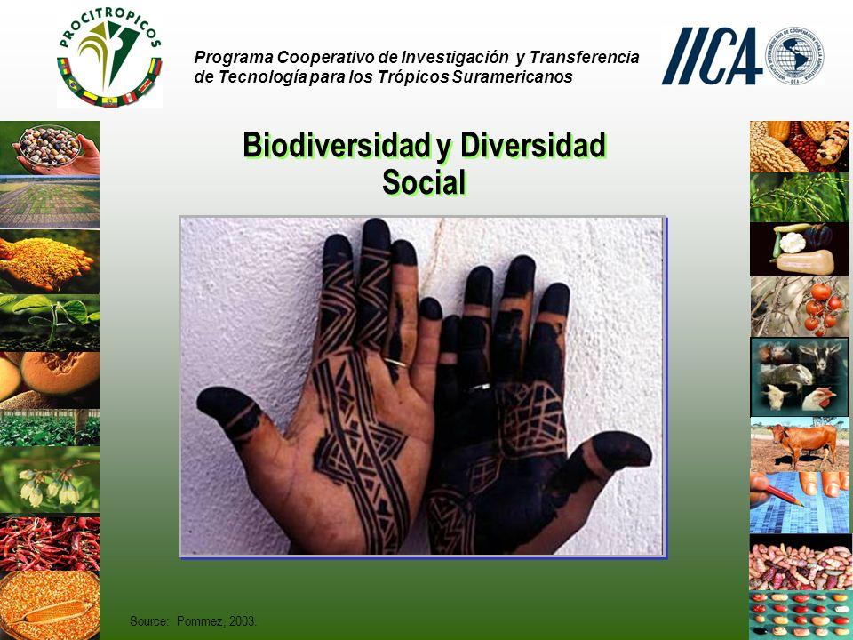 Programa Cooperativo de Investigación y Transferencia de Tecnología para los Trópicos Suramericanos Biodiversidad y Diversidad Social Source: Pommez, 2003.