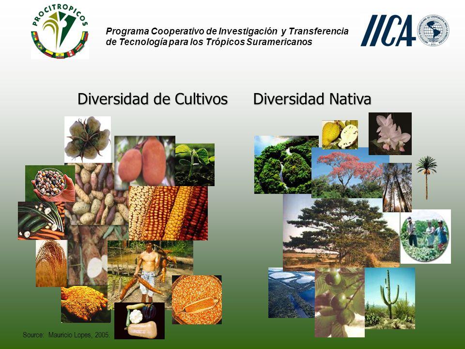 Programa Cooperativo de Investigación y Transferencia de Tecnología para los Trópicos Suramericanos Diversidad de Cultivos Diversidad Nativa Source: Mauricio Lopes, 2005.
