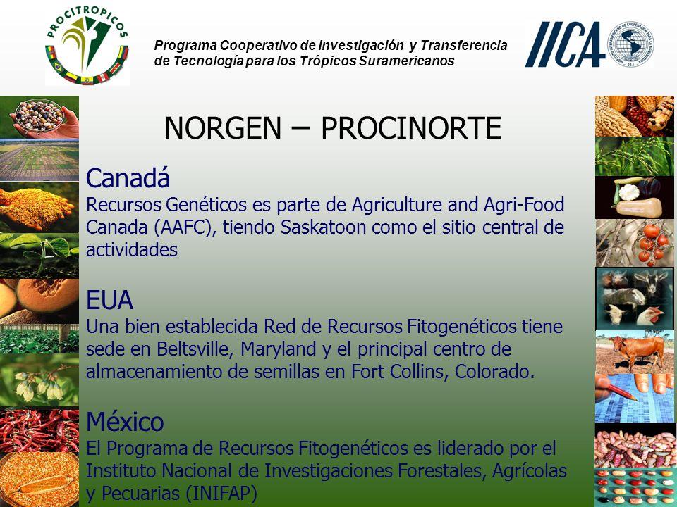 Programa Cooperativo de Investigación y Transferencia de Tecnología para los Trópicos Suramericanos NORGEN – PROCINORTE Canadá Productos alimenticios Cerca de 90.000 accesiones Trigo (10.000), Cebada (40.000) y Avena (27.000) Forrajes Cerca de 3.000 accesiones Medicago (900) y Melilotus (700) - Caracterización Cerca de 2 millón de datos puntuales GRIN-CA base de datos es accesible en la web