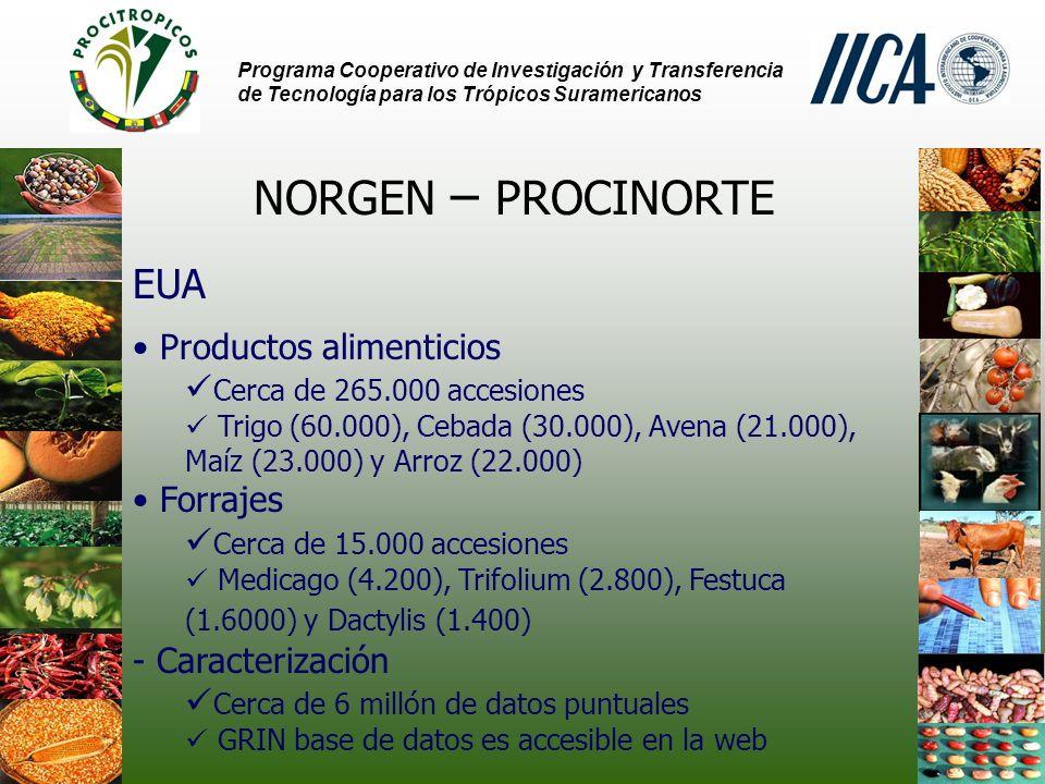 Programa Cooperativo de Investigación y Transferencia de Tecnología para los Trópicos Suramericanos NORGEN – PROCINORTE EUA Productos alimenticios Cerca de 265.000 accesiones Trigo (60.000), Cebada (30.000), Avena (21.000), Maíz (23.000) y Arroz (22.000) Forrajes Cerca de 15.000 accesiones Medicago (4.200), Trifolium (2.800), Festuca (1.6000) y Dactylis (1.400) - Caracterización Cerca de 6 millón de datos puntuales GRIN base de datos es accesible en la web
