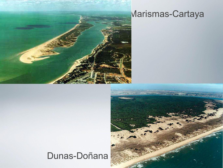 Marismas-Cartaya Dunas-Doñana