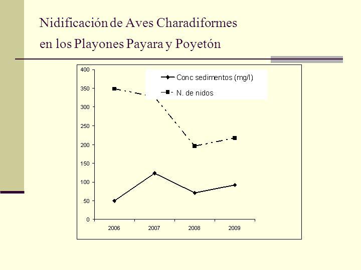 Nidificación de Aves Charadiformes en los Playones Payara y Poyetón