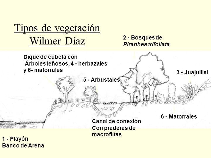 1 - Playón Banco de Arena Dique de cubeta con Árboles leñosos, 4 - herbazales y 6- matorrales 5 - Arbustales Canal de conexión Con praderas de macrofi