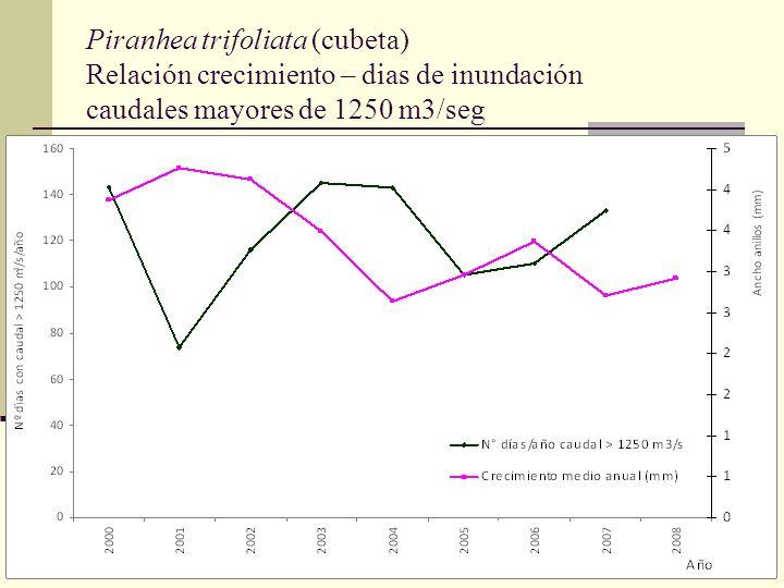 Piranhea trifoliata (cubeta) Relación crecimiento – dias de inundación caudales mayores de 1250 m3/seg