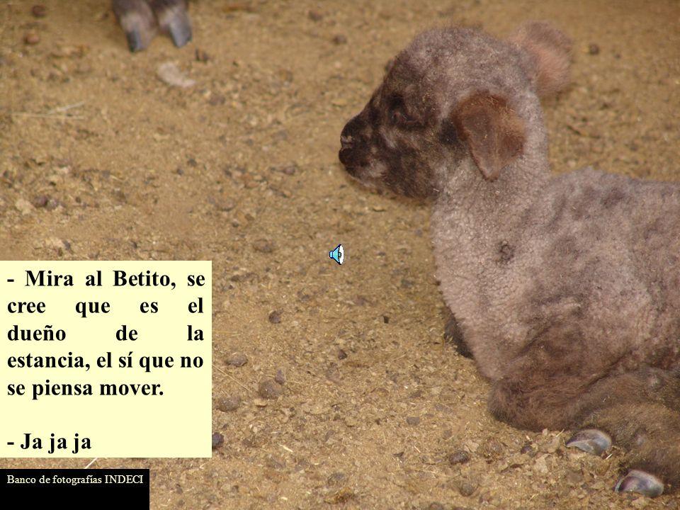 - Mira al Betito, se cree que es el dueño de la estancia, el sí que no se piensa mover.
