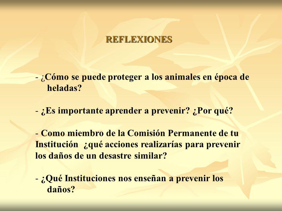 REFLEXIONES - ¿Cómo se puede proteger a los animales en época de heladas.