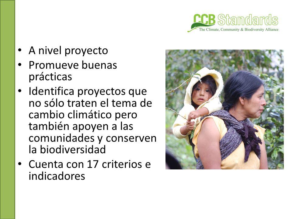 Promueve el manejo sustentable de los bosques En México se han desarrollado 10 principios cada uno con sus criterios que tocan temas de salvaguardas Se enfoca en el manejo forestal