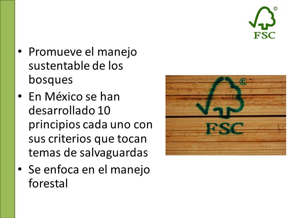 Conclusiones Protocolo de CAR: CCB y FSC Encontramos que el REDD+ SES es el más completo y con mayor detalle.