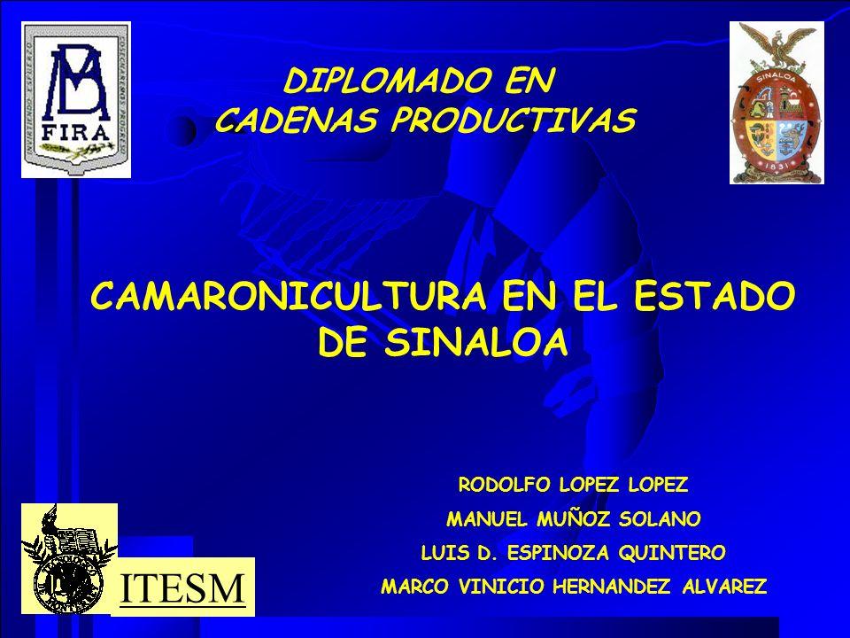 ESTRATEGIAS COMPETITIVAS PARA LA CONSOLIDACION DE LAS LINEAS DE ACCION EN EL CLUSTER CAMARONICULTURA CADENA VALOR PROYECTO LABORATORIO DE LARVASINVESTIGACIÓN Y DESARROLLO DE LARVAS DE CALIDAD ENLACES DE LAS CADENAS DE VALOR (HACIA ATRÁS Y ADELANTE) PROVEEDORES DE INSUMOS Y SERVICIOS, Y PRODUCCIÓN ACUICOLA OBJETIVO: DESARROLLAR UNA INVESTIGACIÓN CON ÉNFASIS EN EL MEJORAMIENTO GENETICO DE LA ESPECIE QUE SE CULTIVA.