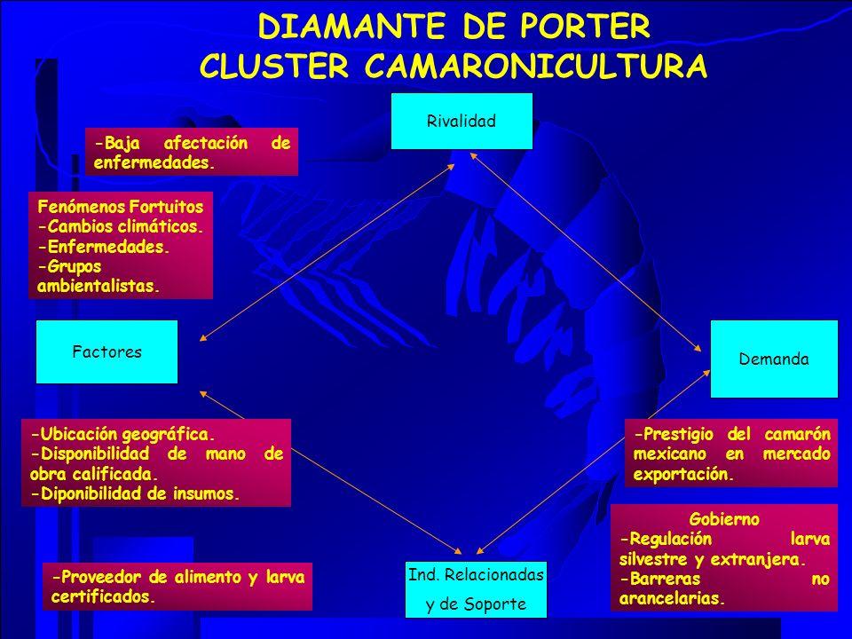 DIAMANTE DE PORTER CLUSTER CAMARONICULTURA Rivalidad Ind. Relacionadas y de Soporte Factores Demanda -Baja afectación de enfermedades. -Prestigio del