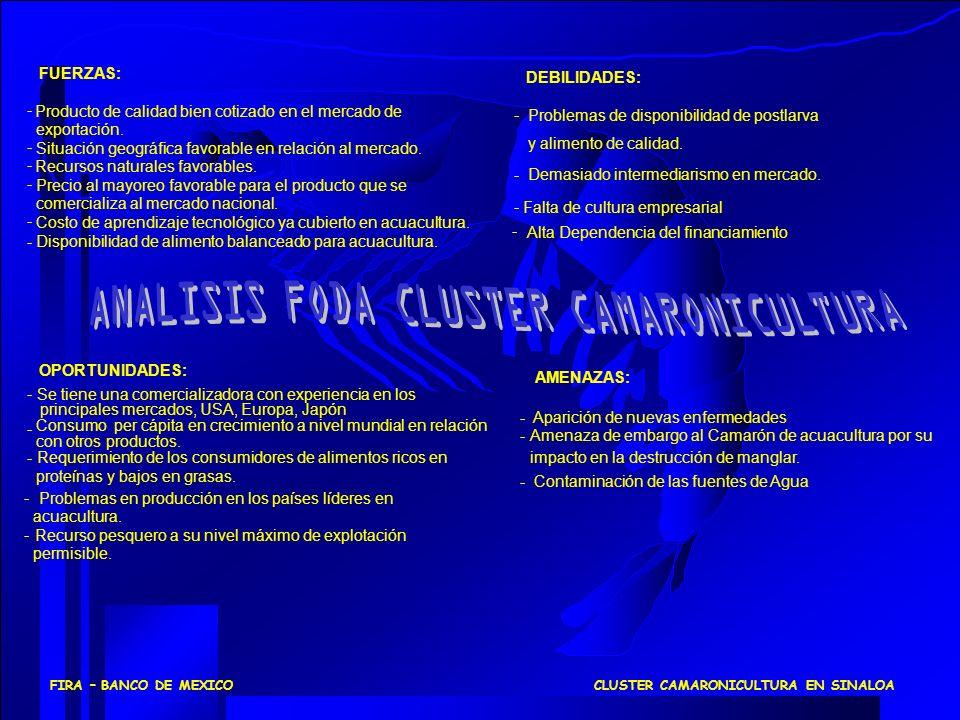 CLUSTER CAMARONICULTURA EN SINALOAFIRA – BANCO DE MEXICO FUERZAS: Producto de calidad bien cotizado en el mercado de exportación. Situación geográfica