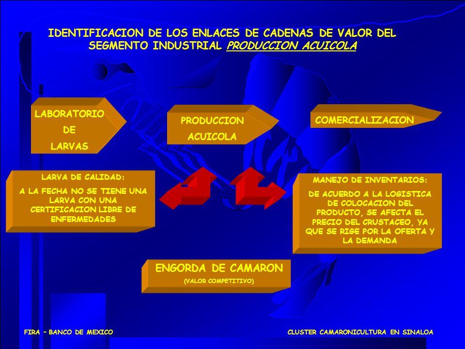 COMERCIALIZACION PRODUCCION ACUICOLA IDENTIFICACION DE LOS ENLACES DE CADENAS DE VALOR DEL SEGMENTO INDUSTRIAL PRODUCCION ACUICOLA LARVA DE CALIDAD: A