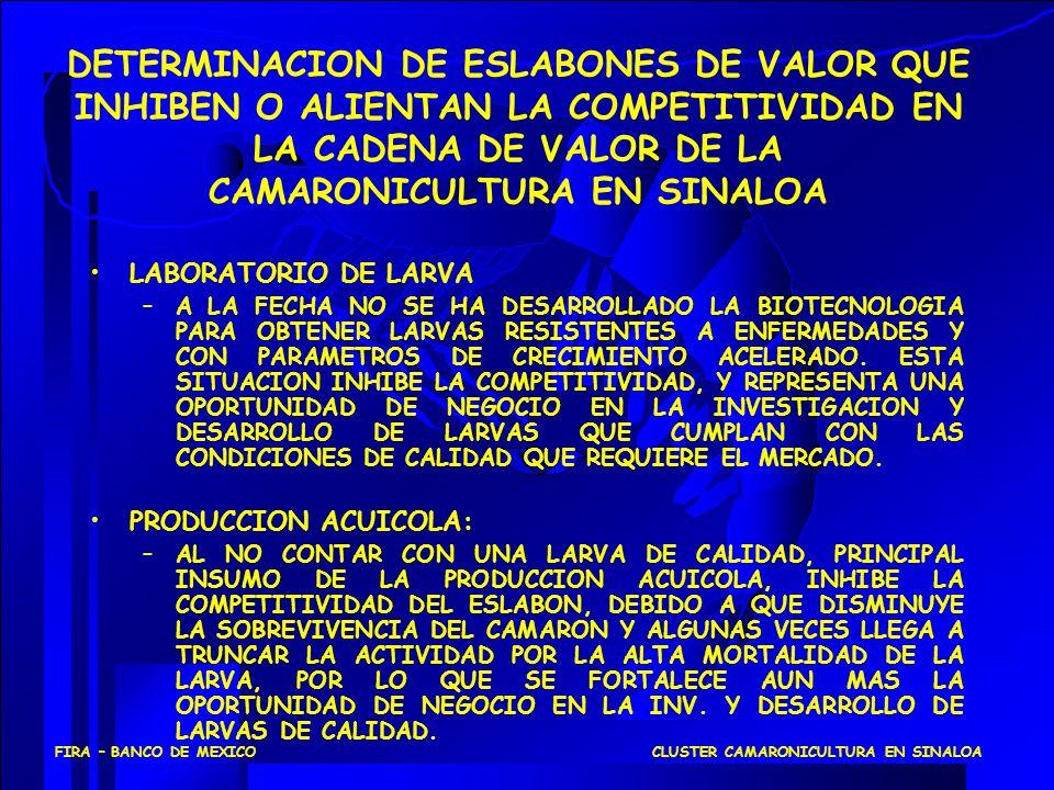 DETERMINACION DE ESLABONES DE VALOR QUE INHIBEN O ALIENTAN LA COMPETITIVIDAD EN LA CADENA DE VALOR DE LA CAMARONICULTURA EN SINALOA LABORATORIO DE LAR