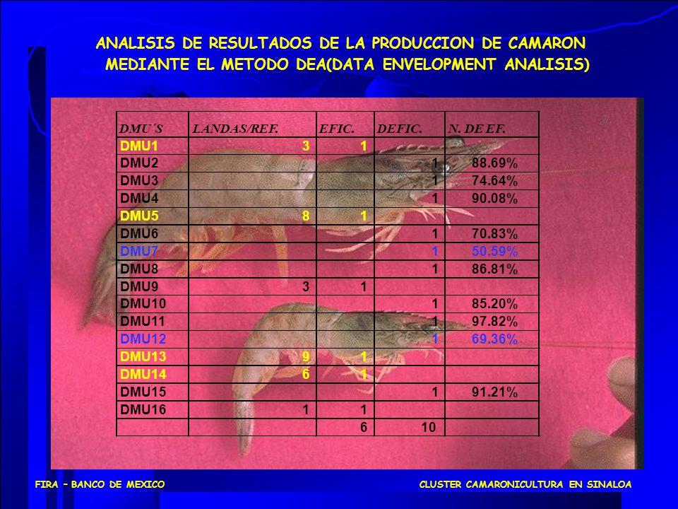 ANALISIS DE RESULTADOS DE LA PRODUCCION DE CAMARON MEDIANTE EL METODO DEA(DATA ENVELOPMENT ANALISIS) DMU´SLANDAS/REF.EFIC.DEFIC.N. DE EF. DMU131 DMU21