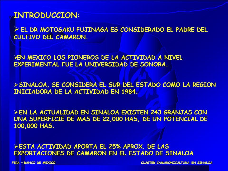 CLUSTER CAMARONICULTURA EN SINALOAFIRA – BANCO DE MEXICO POSICIONAMIENTO APLICANDO MODELO DE LAS CINCO FUERZAS CLUSTER CAMARONICULTURA Competidores Potenciales Sustitutos ProveedoresCompradores Competidores en el Sector Industrial Rivalidad entre los Competidores Existentes Poder de negociación del producto es del acuacultor, en base a: - Baja concentración de compradores - Alta demanda.