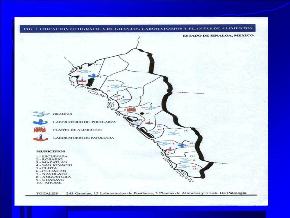 ANALISIS DE RESULTADOS DE LA PRODUCCION DE CAMARON MEDIANTE EL METODO DEA(DATA ENVELOPMENT ANALISIS) DMU´SLANDAS/REF.EFIC.DEFIC.N.