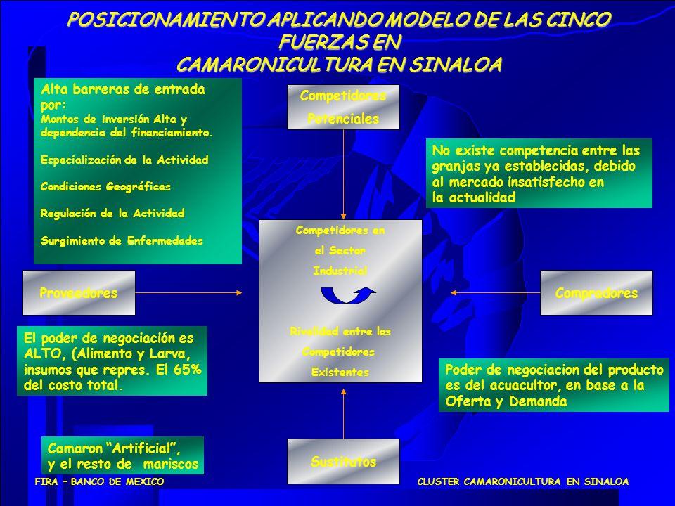 CLUSTER CAMARONICULTURA EN SINALOAFIRA – BANCO DE MEXICO GranjasAcuícolas Laboratorios de postlarva /cria Alimentos balanceados Procesadora de Camarón Insumos especializados (cal, medicamentos) Industrias de apoyo Lab.