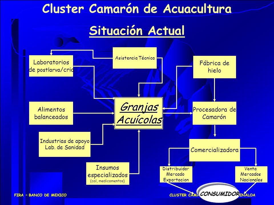 CLUSTER CAMARONICULTURA EN SINALOAFIRA – BANCO DE MEXICO GranjasAcuícolas Laboratorios de postlarva /cria Alimentos balanceados Procesadora de Camarón