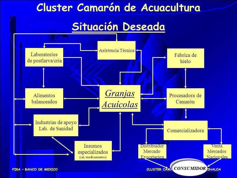 CLUSTER CAMARONICULTURA EN SINALOAFIRA – BANCO DE MEXICO ProducciónAcuícola Laboratorios de postlarva/cria Alimentos balanceados Procesadora de Camarón Insumos especializados (cal, medicamentos) Industrias de apoyo Lab.
