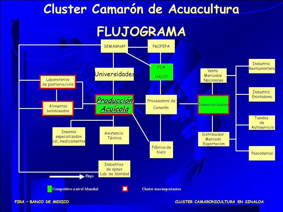 COMERCIALIZACION PRODUCCION ACUICOLA IDENTIFICACION DE LOS ENLACES DE CADENAS DE VALOR DEL SEGMENTO INDUSTRIAL PRODUCCION ACUICOLA LARVA DE CALIDAD: A LA FECHA NO SE TIENE UNA LARVA CON UNA CERTIFICACION LIBRE DE ENFERMEDADES MANEJO DE INVENTARIOS: DE ACUERDO A LA LOGISTICA DE COLOCACION DEL PRODUCTO, SE AFECTA EL PRECIO DEL CRUSTACEO, YA QUE SE RIGE POR LA OFERTA Y LA DEMANDA LABORATORIO DE LARVAS ENGORDA DE CAMARON (VALOR COMPETITIVO) CLUSTER CAMARONICULTURA EN SINALOAFIRA – BANCO DE MEXICO
