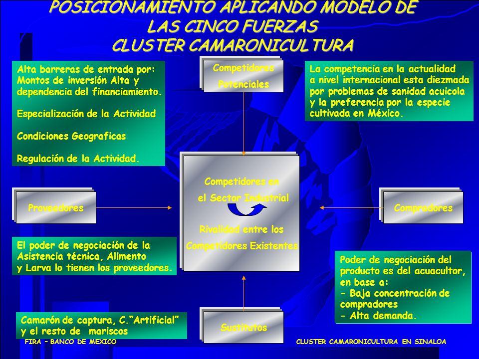 CLUSTER CAMARONICULTURA EN SINALOAFIRA – BANCO DE MEXICO POSICIONAMIENTO APLICANDO MODELO DE LAS CINCO FUERZAS CLUSTER CAMARONICULTURA Competidores Po