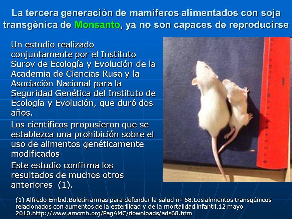 La tercera generación de mamíferos alimentados con soja transgénica de Monsanto, ya no son capaces de reproducirse Un estudio realizado conjuntamente