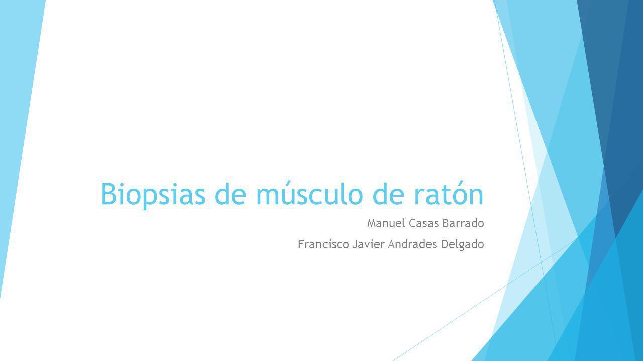 Biopsias de músculo de ratón Manuel Casas Barrado Francisco Javier Andrades Delgado