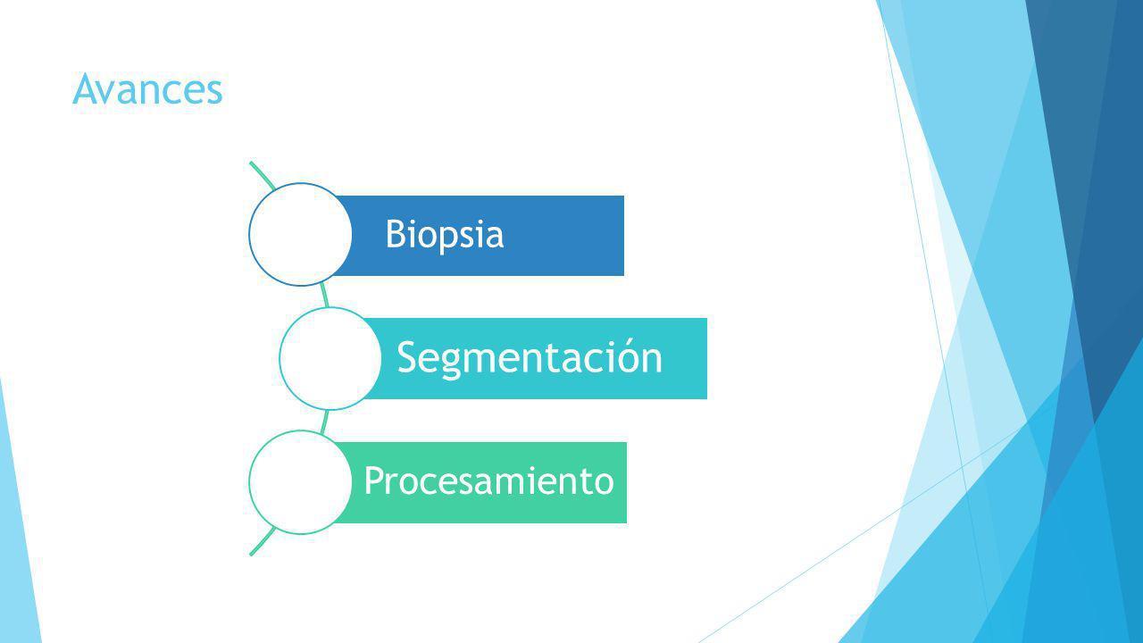 Avances Biopsia Segmentación Procesamiento