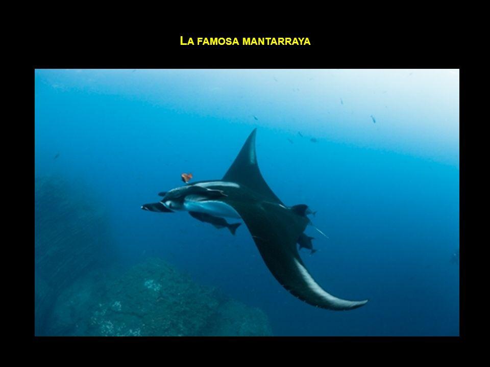 L A FAMOSA MANTARRAYA