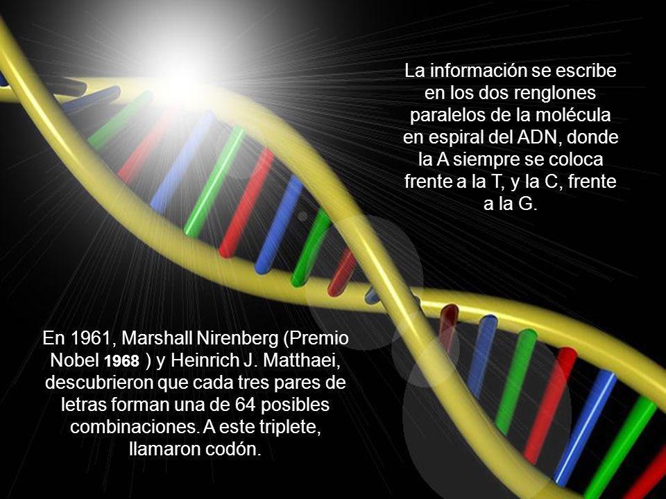 La secuencia química específica contenida en una molécula de ADN, es la que determinan la información genética diferente para cada especie. Dicha info