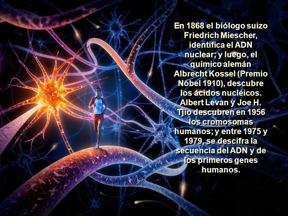 En 1920, el profesor de botánica alemán, Hans Winkler, acuñó el término Genoma. El Genoma es la totalidad de la información genética que posee un orga
