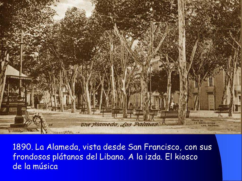 1890. Alameda, plátanos del Líbano y bancos de piedra. Paseo central