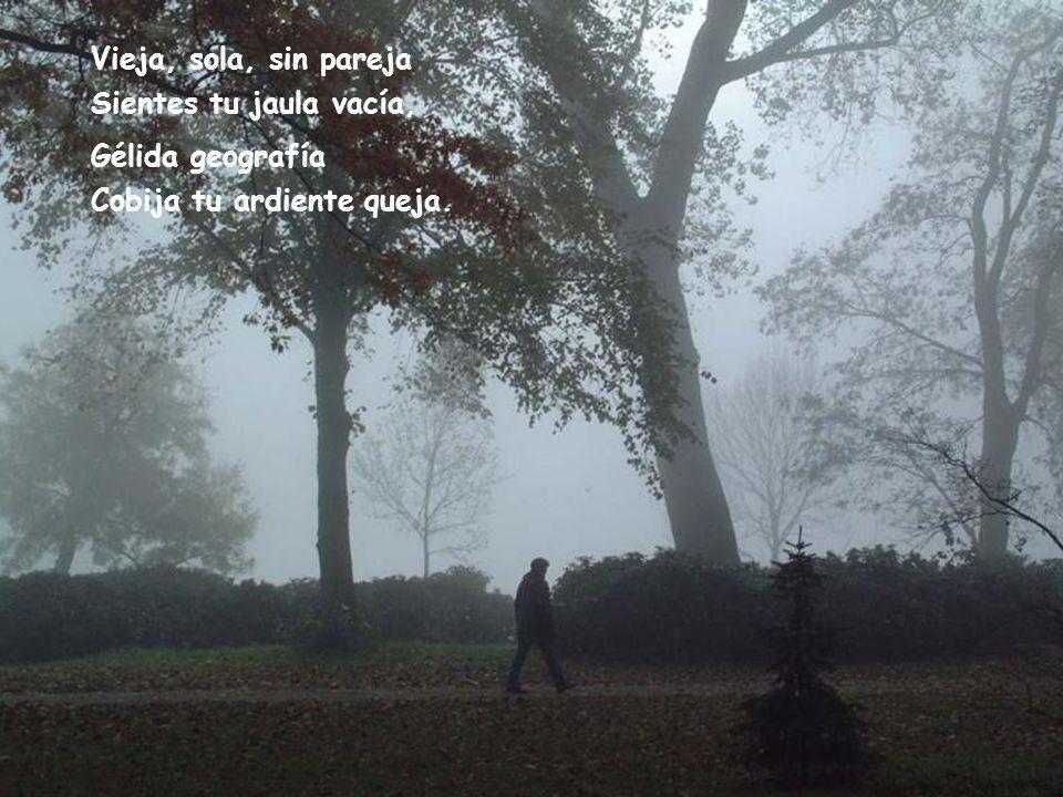 Vieja, sola, sin pareja Sientes tu jaula vacía, Gélida geografía Cobija tu ardiente queja.