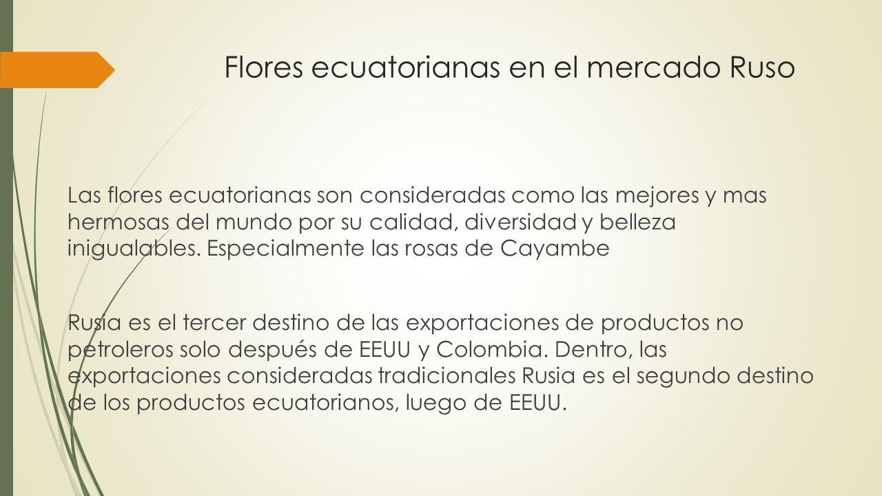Flores ecuatorianas en el mercado Ruso Las flores ecuatorianas son consideradas como las mejores y mas hermosas del mundo por su calidad, diversidad y