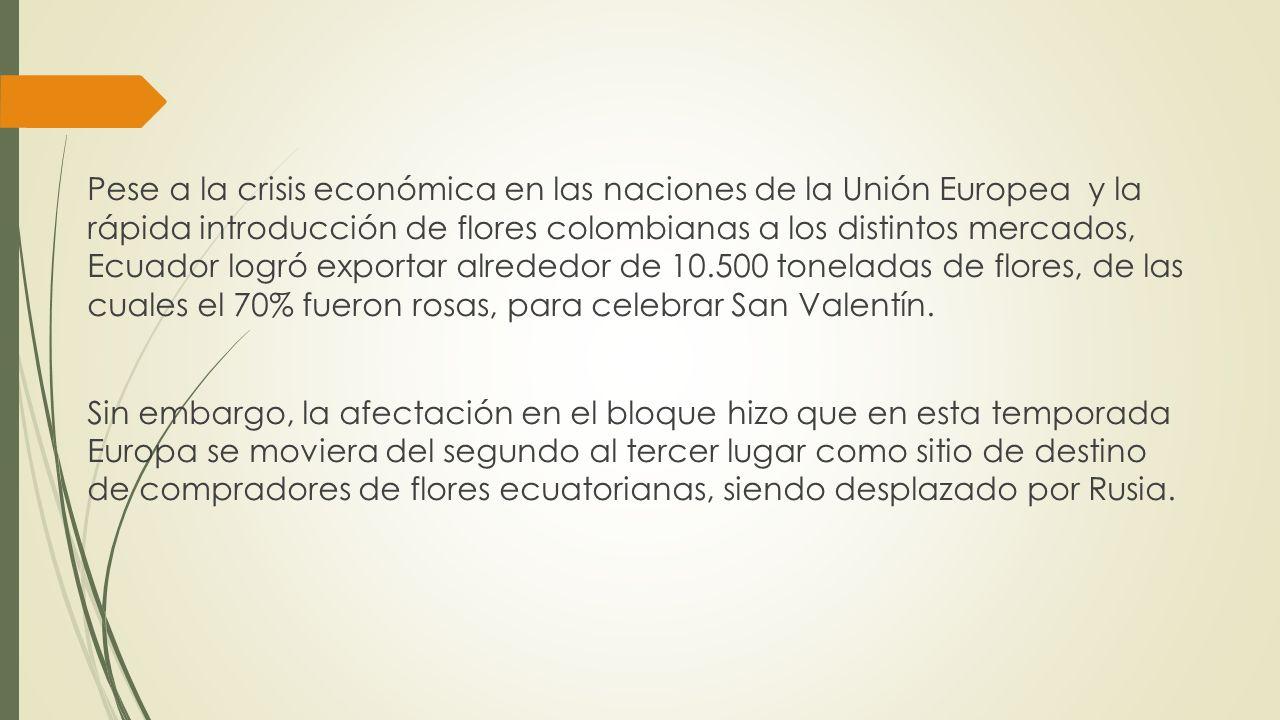Pese a la crisis económica en las naciones de la Unión Europea y la rápida introducción de flores colombianas a los distintos mercados, Ecuador logró
