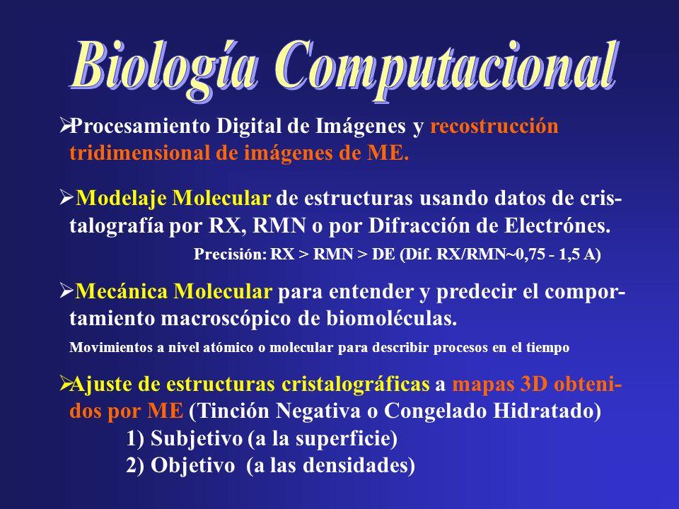 Procesamiento Digital de Imágenes y recostrucción tridimensional de imágenes de ME. Modelaje Molecular de estructuras usando datos de cris- talografía