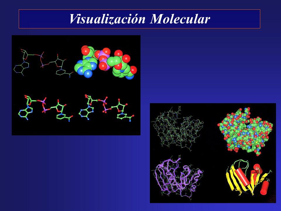 Visualización Molecular