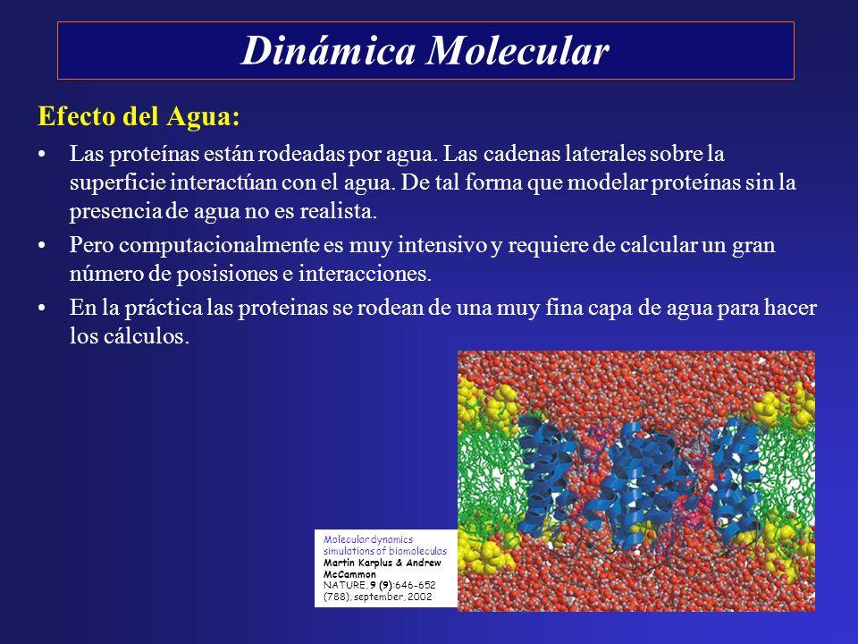 Efecto del Agua: Las proteínas están rodeadas por agua. Las cadenas laterales sobre la superficie interactúan con el agua. De tal forma que modelar pr